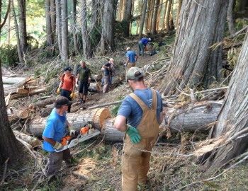 Cabin Trail and Old Growth trail work